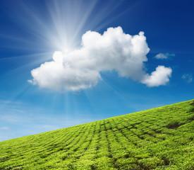 Fototapete - Tea plantation