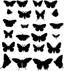 twenty four butterfly silhouettes