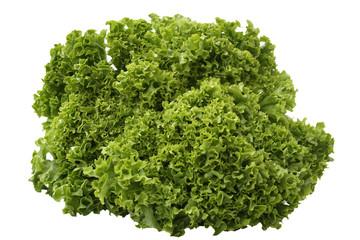 Indivie Salat