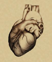 Anatomia illustrata - Il Cuore