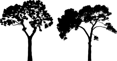 Two tree silhouettes on white