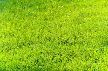 Green glass under the bright summer sun