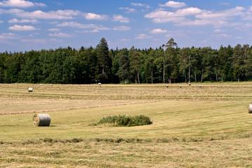 Weizenfeld im Sommer,mit Strohballen