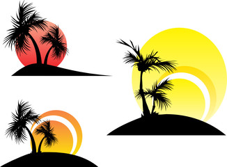 palm trees on a sunset