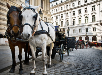 Spoed Foto op Canvas Wenen Horse-driven carriage at Hofburg palace, Vienna