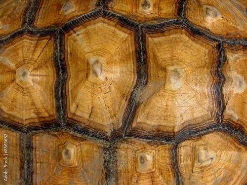 turtle shell pattern - HD1200×900