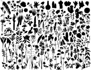 biggest collection of vector plants
