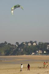 cerf-volant de mer