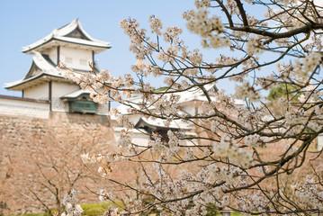 桜の金沢城