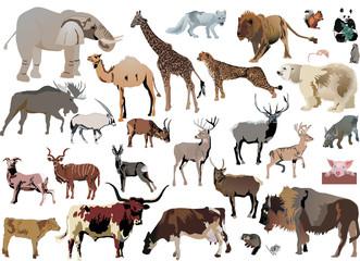 color animals set