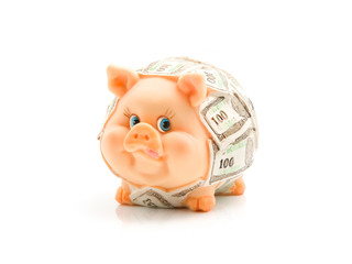 Funny piggie with USD