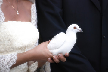 Marriage with white dove ready to fly