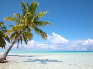Bahamas cocotier sur plage Iles Turkoises