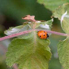 Life beetles