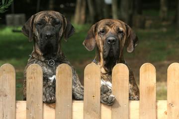 chiens sur un portail