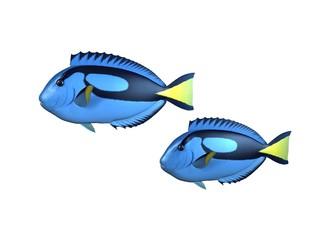 poissons chirurgiens