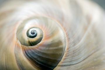 Foto auf AluDibond Spirale Schneckenhaus