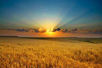 Wall Murals Culture Golden field