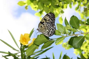 butterfly gardening
