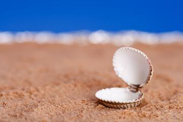 opened  seashell on beach sand and sky background, shallow DOF