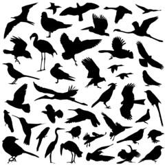 collection of bird vector