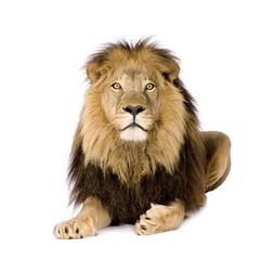 Foto auf Leinwand Löwe Lion (4 and a half years)