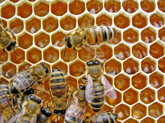 Young bees conduct the half of the life in a beehive.