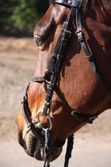 Horse portrait 3