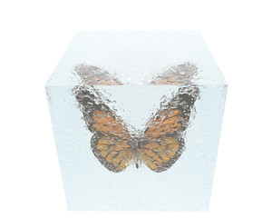 butterfly in ice cube isolated on white background