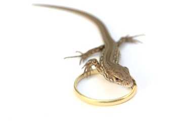 lizard with wedding ring