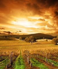 Papiers peints Vignoble Autumn Sunset over vineyard