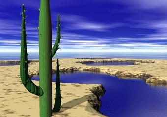 cactus dans un oasis