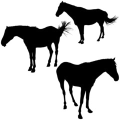 Horses Silhouettes 8 - detailed illustrations
