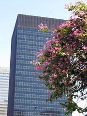 Arbre en fleur et immeuble moderne, Rio de Janeiro, Brésil