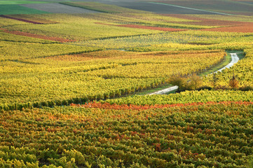 Vineyards in autumn colors. The Rhine valley, Germany