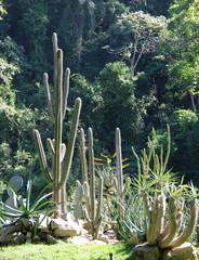 Cactus dans un jardin tropical. Rio de Janeiro. Brésil.