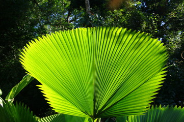 Plante dans un jardin tropical, rio de Janeiro, Brésil