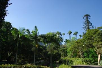 Arbres et palmiers dans un jardin, Rio de Janeiro, Brésil.