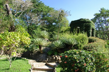 Plantes tropicales dans un jardin, Rio de Janeiro, Brésil.