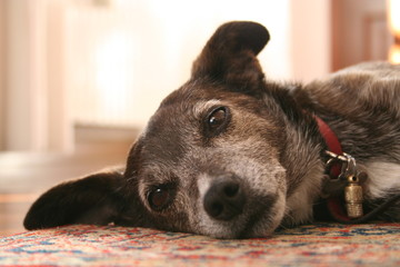 Dog life!