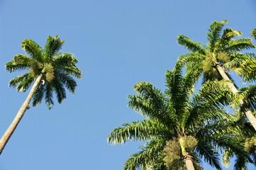 Sous les palmiers, Rio de Janeiro, Brésil