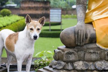 Buddha et le chien