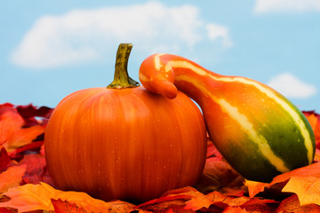 Fall harvest scene with gourds with copy space