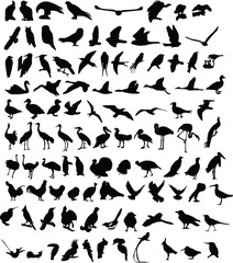 A hundred silhouettes of birds