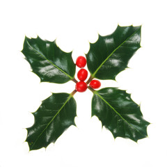 Four Holly leaves and berries isolated on white