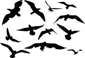 Variety flying sea-gulls vector illustration