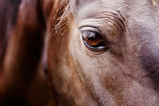A detail of a horse eye