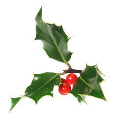 Holly leaves with berries isolated on white