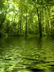 Green forest with ray of light by river
