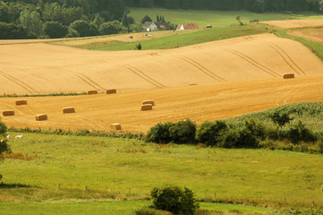 Bales  of straw on the hilly fields.